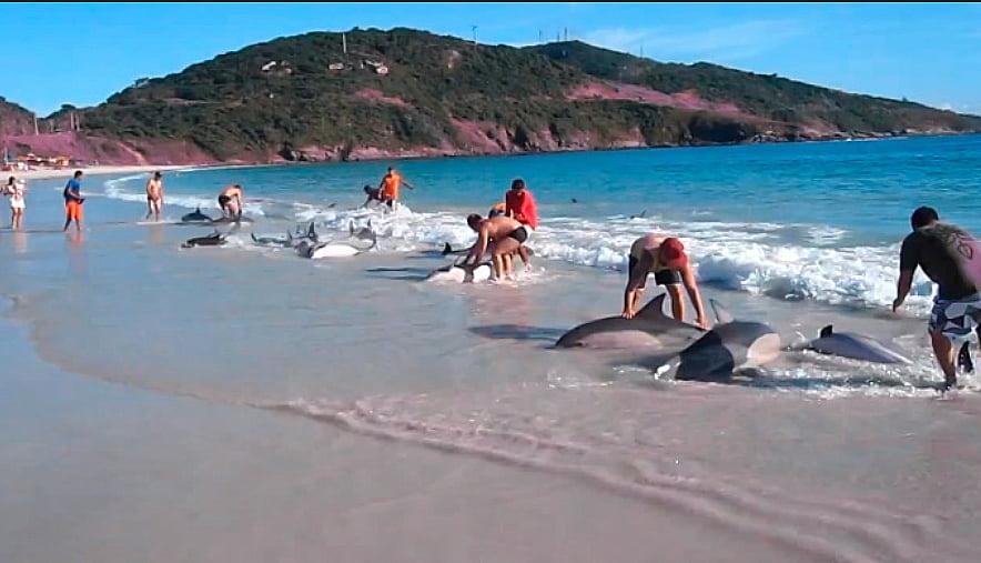 Golfinhos encalhados no Arraial do Cabo, imagem de Golfinhos encalhados no Arraial do Cabo