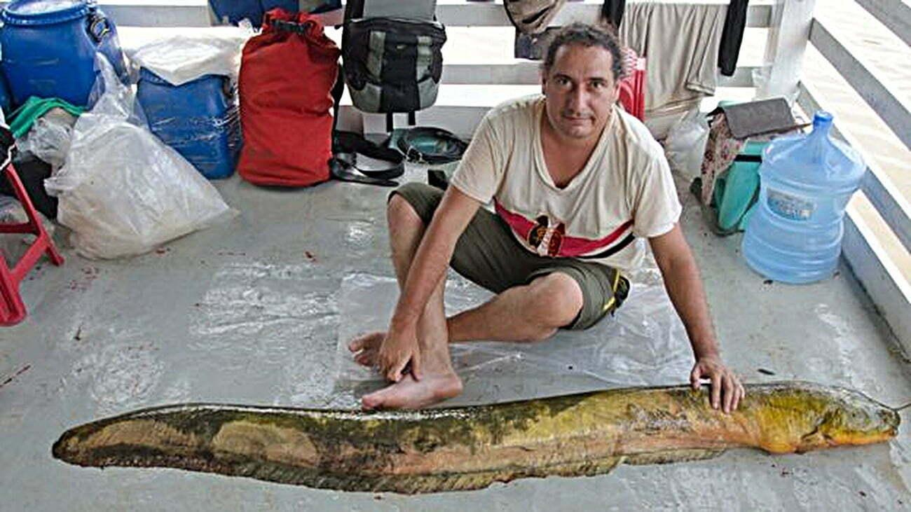 imagem de porque, uma das novas espécies de peixes elétricos da amazônia