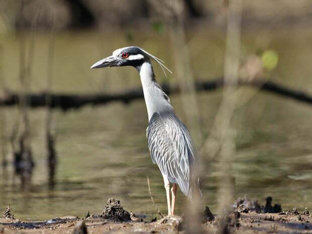 São Sebastião cria área de proteção, imagem de ave marinha
