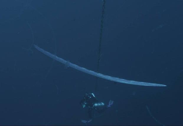 peixe-remo, imagem do peixe- remo