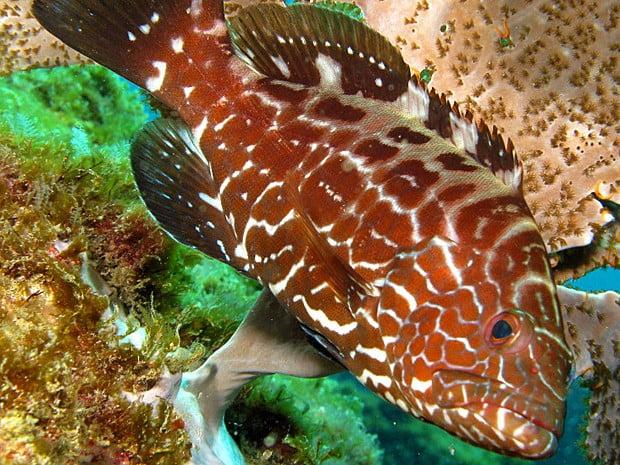 Declínio de sete espécies de peixe no sul da Bahia , imagem de peixe