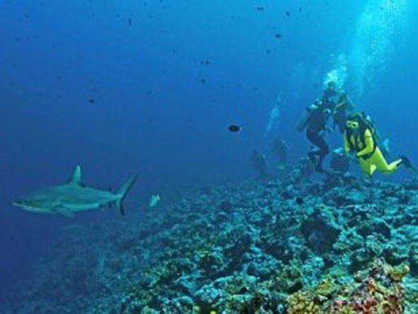 Pesca excessiva de tubarões, imagem de tubarão em recife de coral