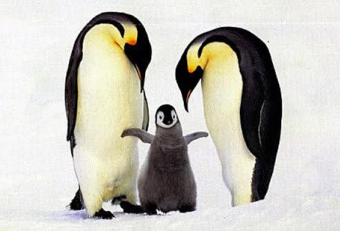 Pinguim Imperador, imagem de Pinguim Imperador