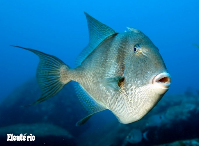 Peixes falam, imagem de peixe