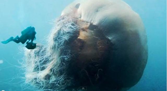 193 Gua Viva Gigante Animal Mais Comprido Da Terra Mar Sem Fim