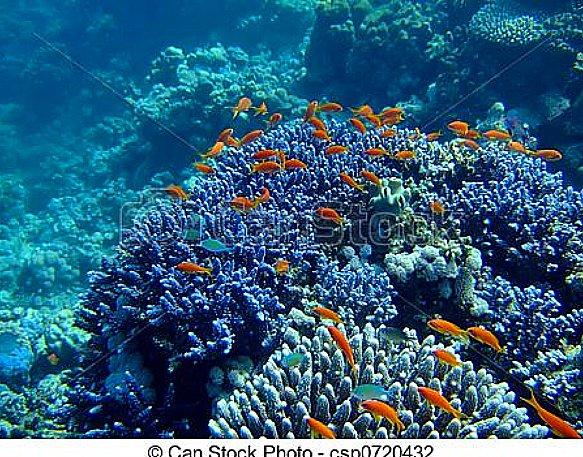 Vida submarina, conheça um pouco da biodiversidade, imagem de corais