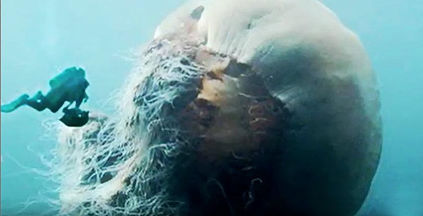 Água viva gigante, imagem de água- viva gigantesca