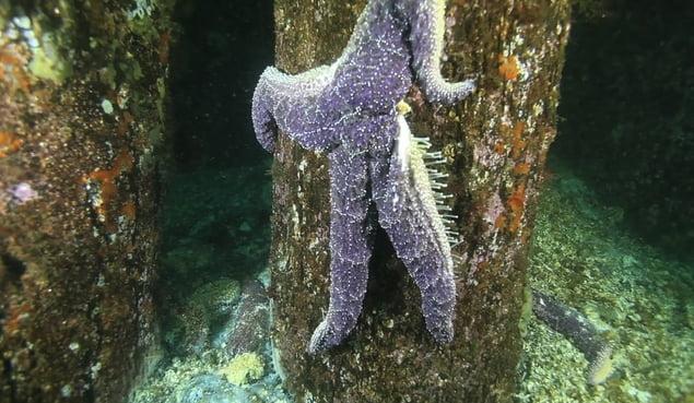 estrelas do mar, imagem de estrelas do mar