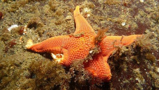 estrelas do mar, imagem de estrela do mar