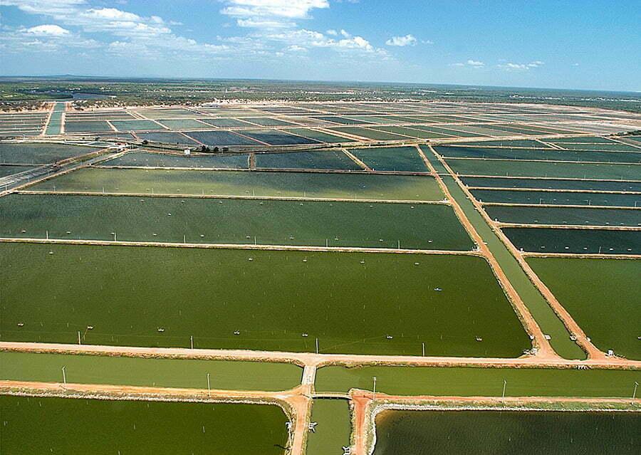 imagem de tanques de carcinicultura que extirpam os manguezais