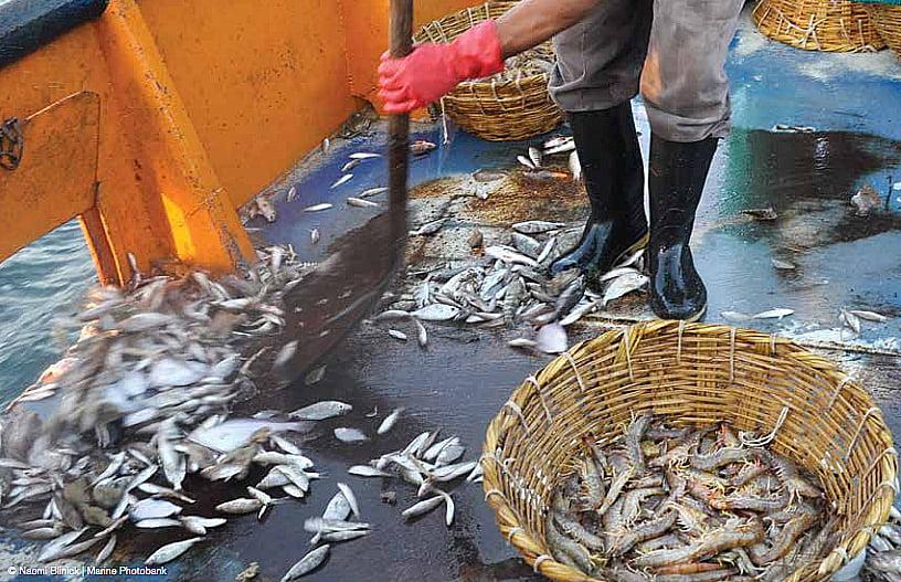 imagem de desperdício da pesca de arrasto