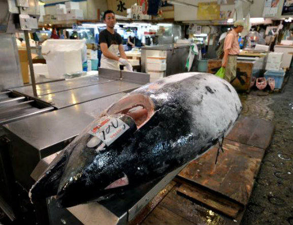 Cotas de pesca de atum vermelho no Mediterrâneo são mantidas, imagem de atum no mercado de tokio