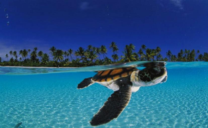 Vida submarina: alguns minutos de beleza, imagem submarina mostrando tartaruga