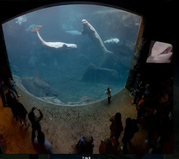 """""""Cid Gomes faz usina termelétrica no Ceará só para aquário"""", imagem de Tanque dos mares austrais do Georgia Aquarium."""