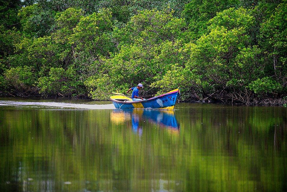 Rebimar, imagem de manguezal