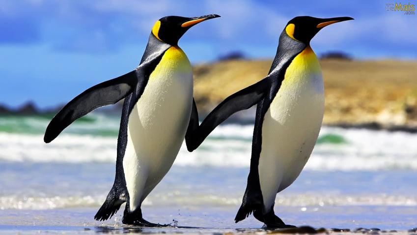 Pinguin Imperador, imagem de Pinguin Imperador