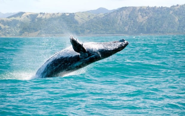 Baleia surpreendente