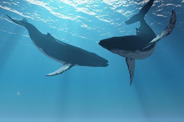 Baleias incríveis e surpreendentes