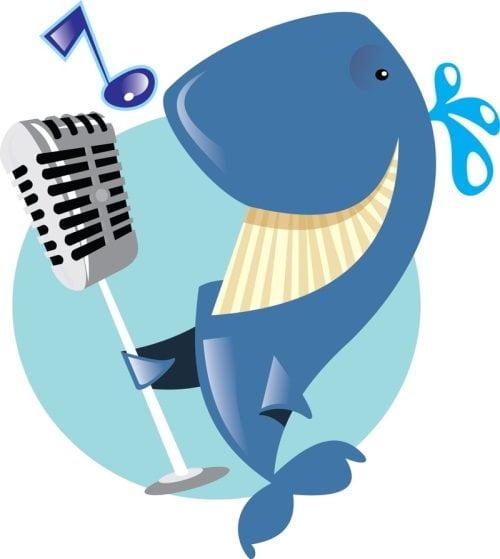 cantoras, fatos estranhos sobre as baleias