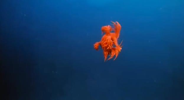 Cena subamarina mostrando criaturas marinhas pouco conhecidas.