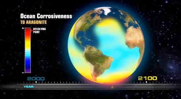 Acidificação dos Oceanos, Tabela mostra o aquecimento global versus a corrosão de animais marinhos