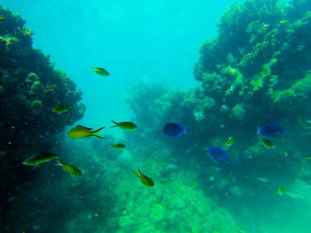 Aquário natural de corais , imagem de Peixes coloridos em corais