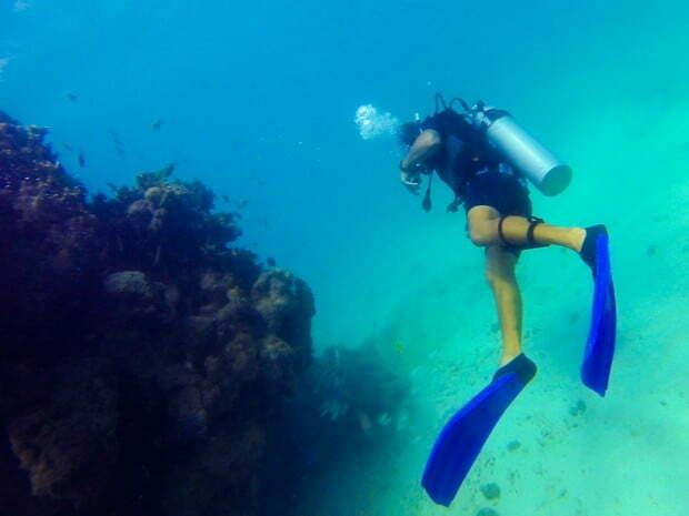 Aquário natural de corais , Mergulhador segue trajeto ao lado de floresta de corais submessa (Foto: Jonathan Lins/G1 AL)