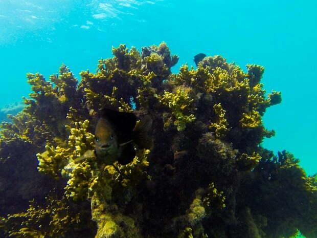 Aquário natural de corais , imagem de Corais