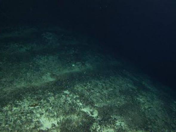 imagem do fundo do mar em artigo sobre exploração minerária