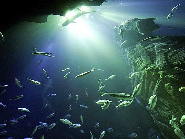 imagem dos oceanos em matéria sobre o início da cúpula dos oceanos 2014