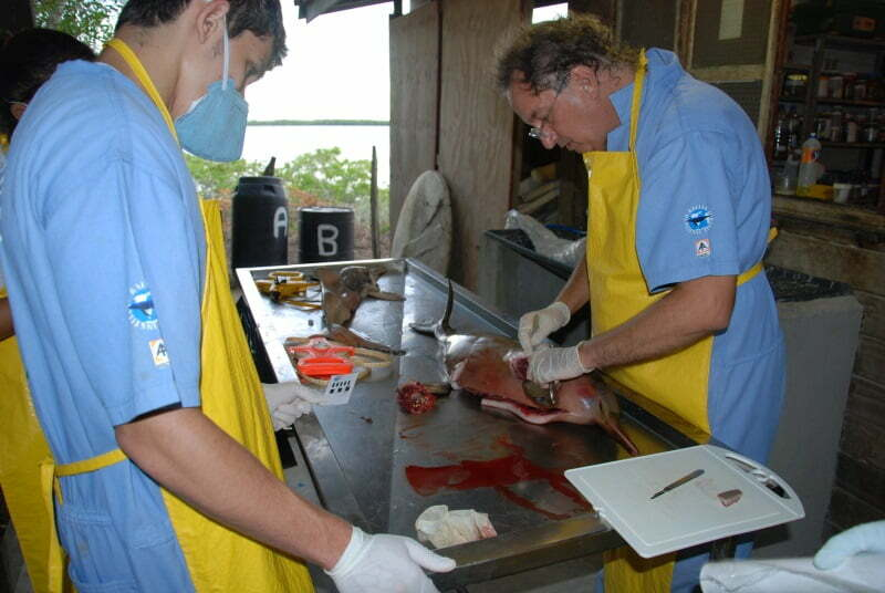 Morte de toninhas no Espírito Santo preocupa ambientalistas , imagem de toninha em laboratório