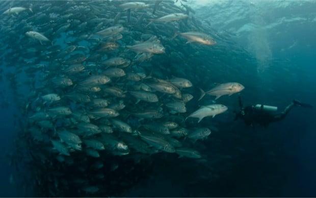 imagem submarina de um tornado de peixes