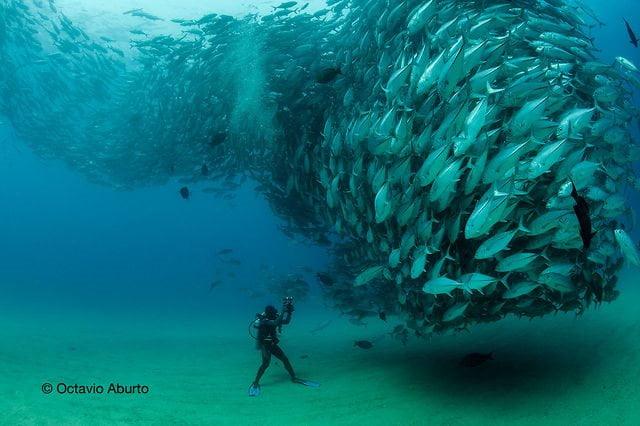 imagem de tornado de peixes e fotógrafo submarino frente a frente
