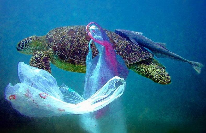 imagem de tartaruga enroscada em  plástico nos oceanos está matando a vida marinha