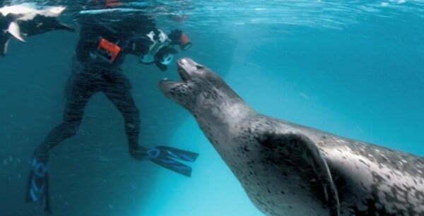 encontro foca-leopardo e fotógrafo