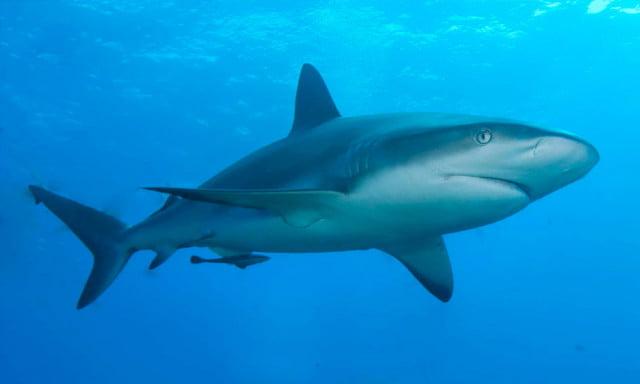 tubarões, foto de tubarão