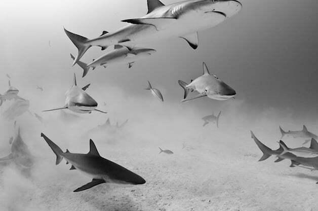 tubarões em close up, imagens de tubarões