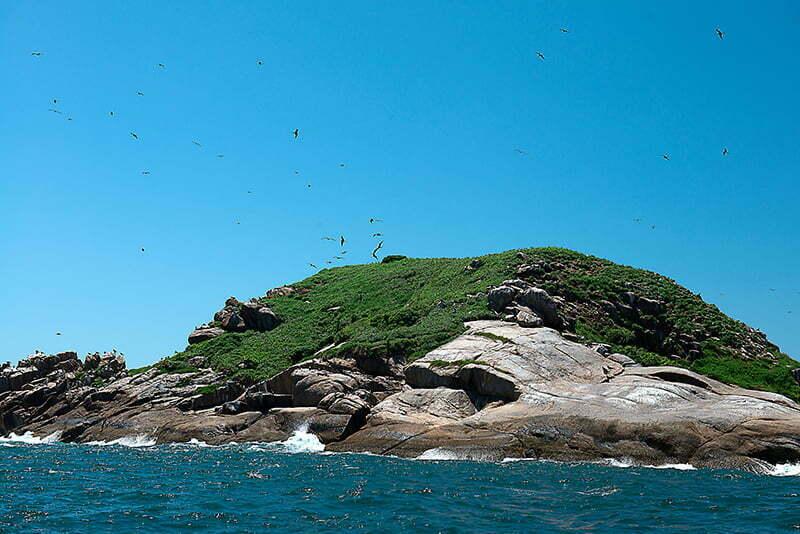 Reserva Biológica Marinha do Arvoredo, Santa Catarina, imagem da ilha-Filhote-de-Galés-e-fragatas