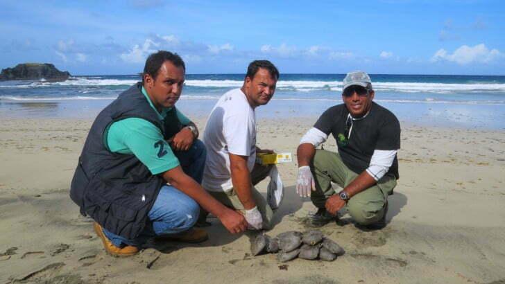 ambientalistas recolhem peixes mortos