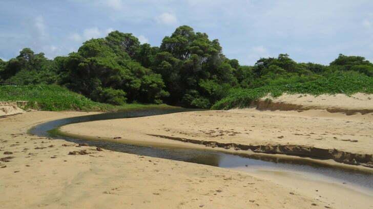 morte de peixes associado ao mangue de Noronha