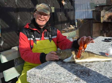 Pescador encontra vibrador na barriga de bacalhau da Noruega, foto de pescador que encontrou vibrador em bacalhau da noruega.
