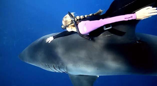 Bióloga nada com tubarões brancos