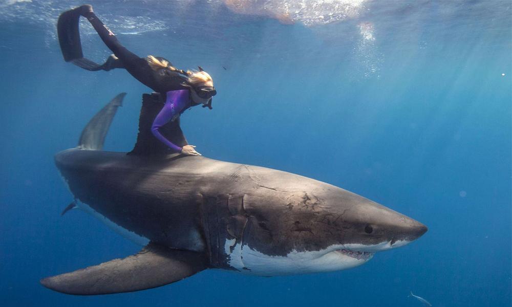Bióloga nada com tubarões brancos,foto de bióloga nadando com tubarões