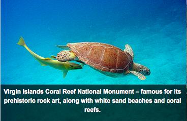 Áreas marinhas protegidas nos USA, imagem de tartarugas em áreas protegidas nos USA