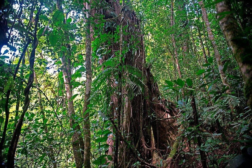 RPPN Salto Morato, Reserva Particular do Patrimônio Natural Salto Morato, imagem de arvore-da mata atlântica