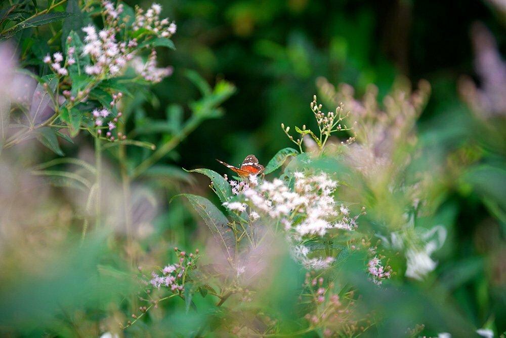 borboleta-e flores na APA E ESEC de Guaraqueçaba