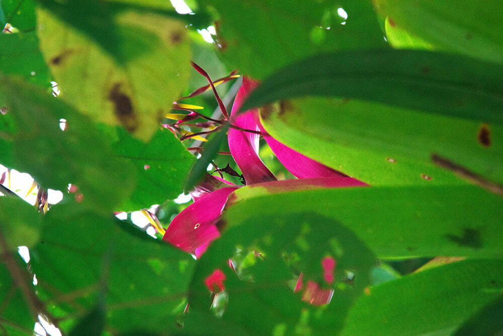 RPPN Salto Morato, Reserva Particular do Patrimônio Natural Salto Morato, imagem de bromelia-mata--