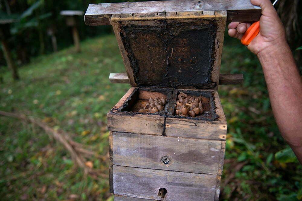 casa-de-abelhas-aberta,APA E ESEC de Guaraqueçaba