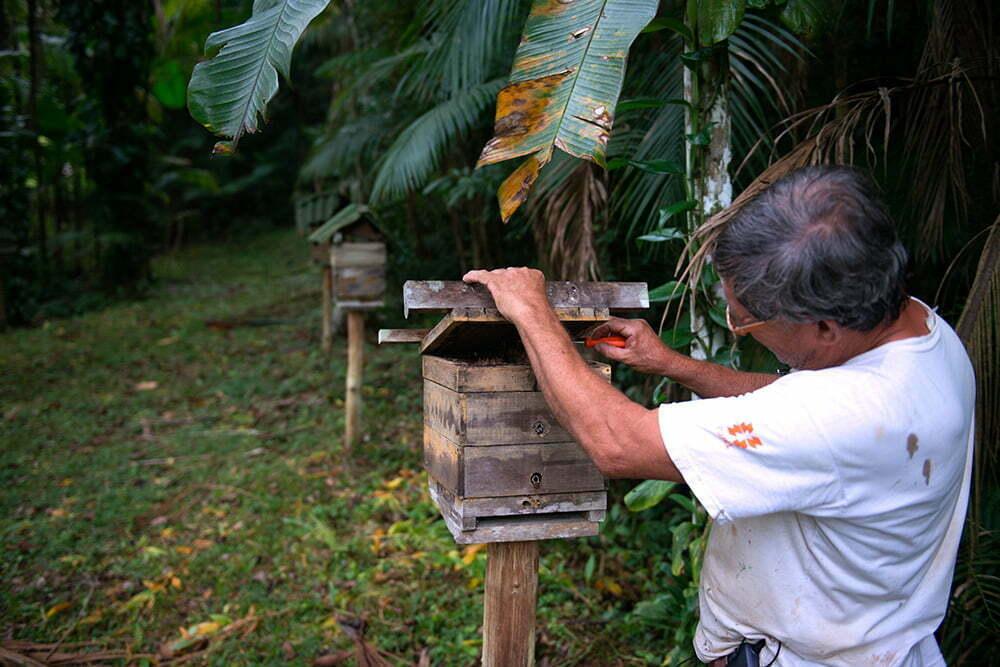 criaçao-de-abelhas,APA E ESEC de Guaraqueçaba