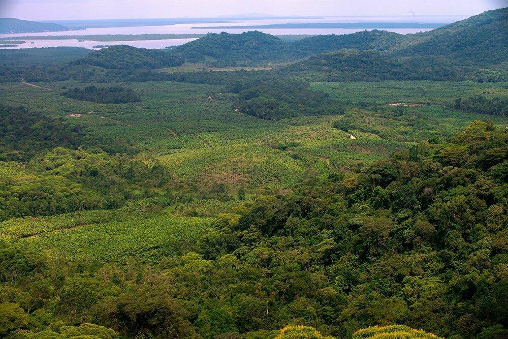 faz-de-palmeira-real-mil,APA E ESEC de Guaraqueçaba